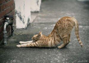 yoga-cat_p
